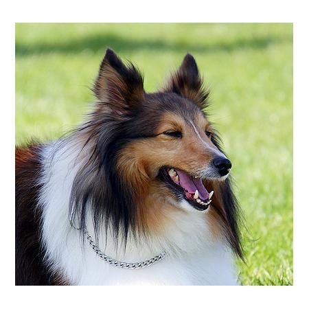 Mobile Dog Grooming Malvern