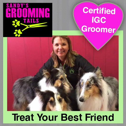 Sandys grooming tails dog cat clipping grooming 73 sharp st sandys grooming tails promotion solutioingenieria Image collections