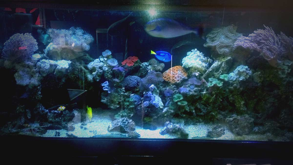 Fish aquarium in brisbane - Have You Used This Business Tell Others About It With A Yellow Pages Review