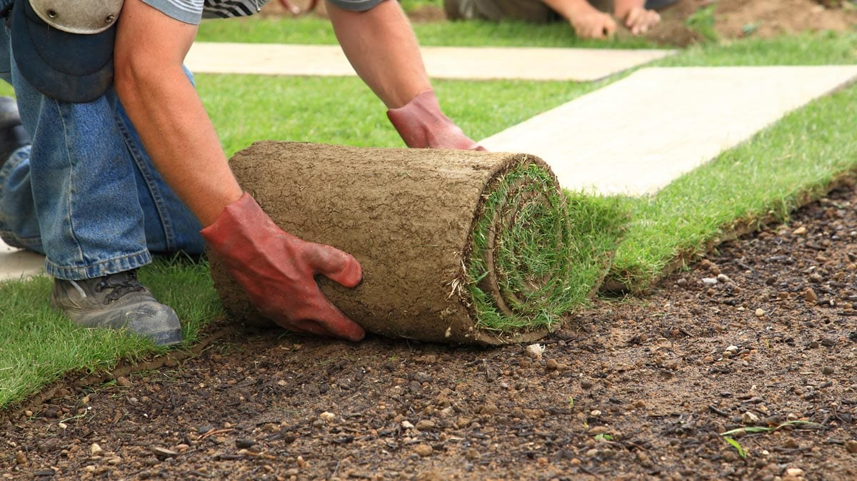 Image result for turf supplies