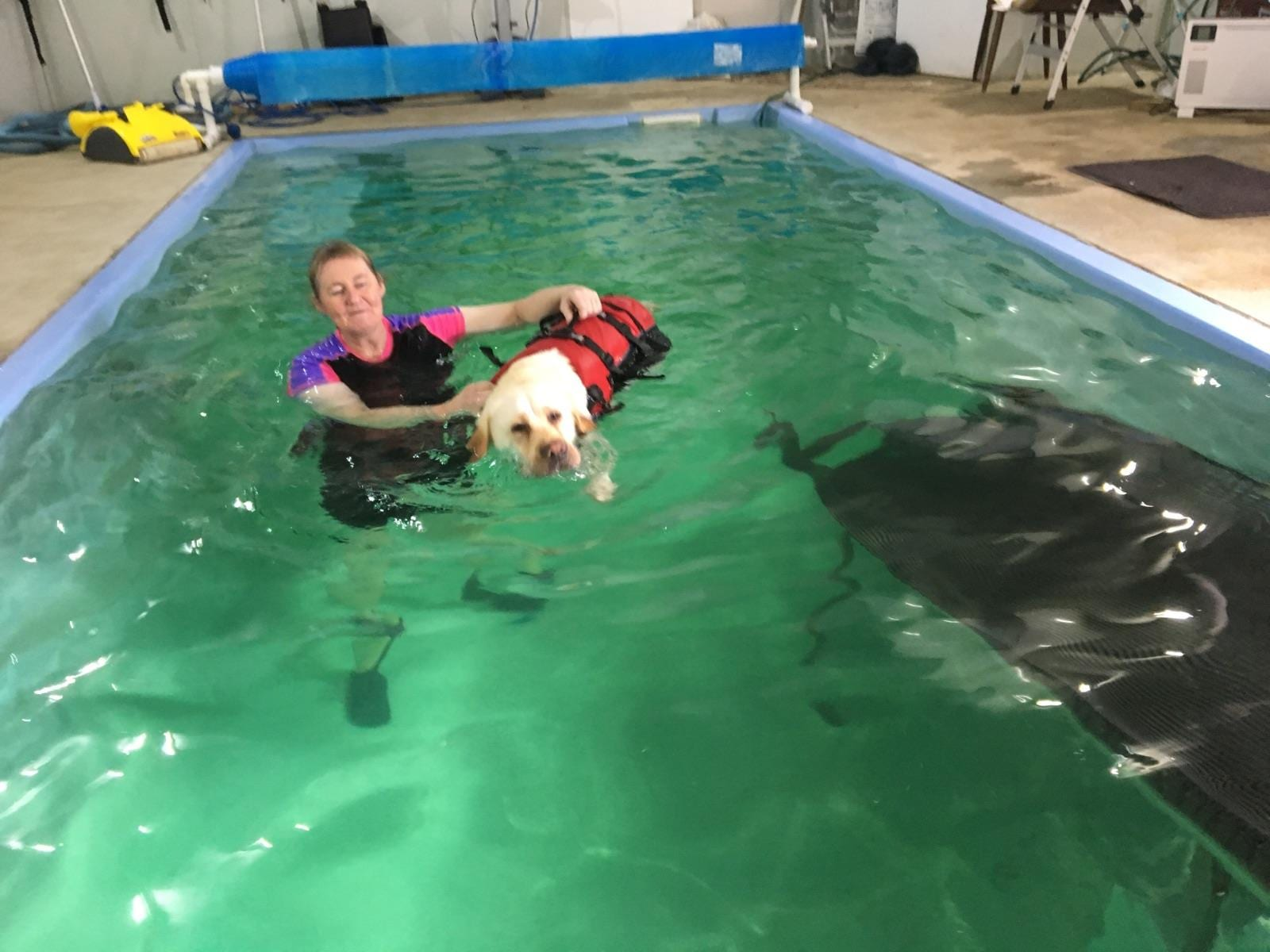 Blackpaws Canine Hydrotherapy Pool And Home Pet Care Pet Care 63 Hamiltons Lane Kirkstall