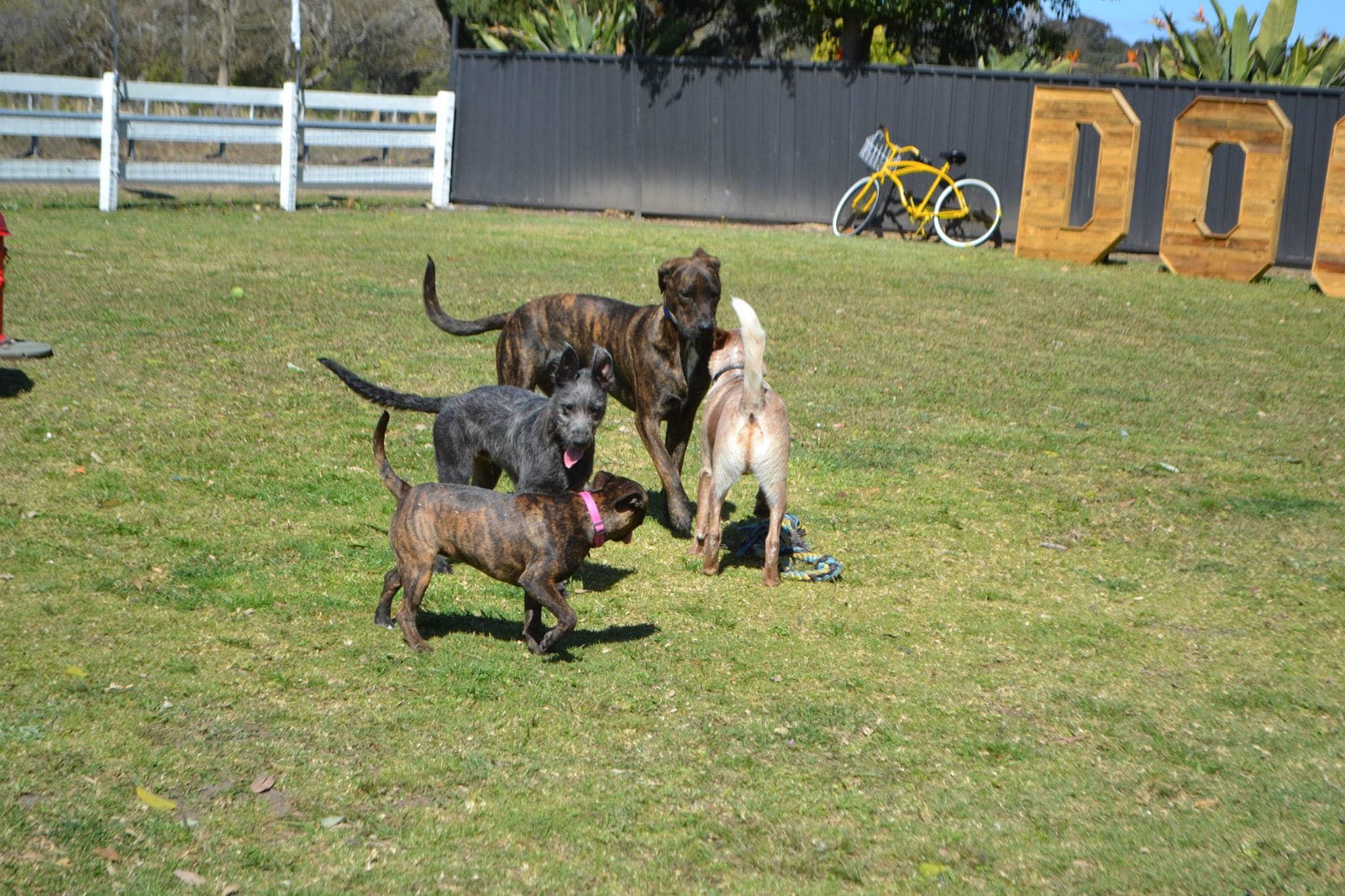 Dog Boarding Kennels Illawarra Nsw
