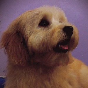 Dog Grooming In Seven Hills