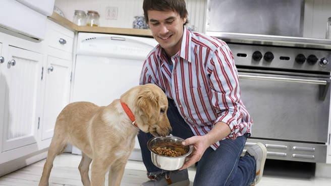 Dog Breeds Dixons