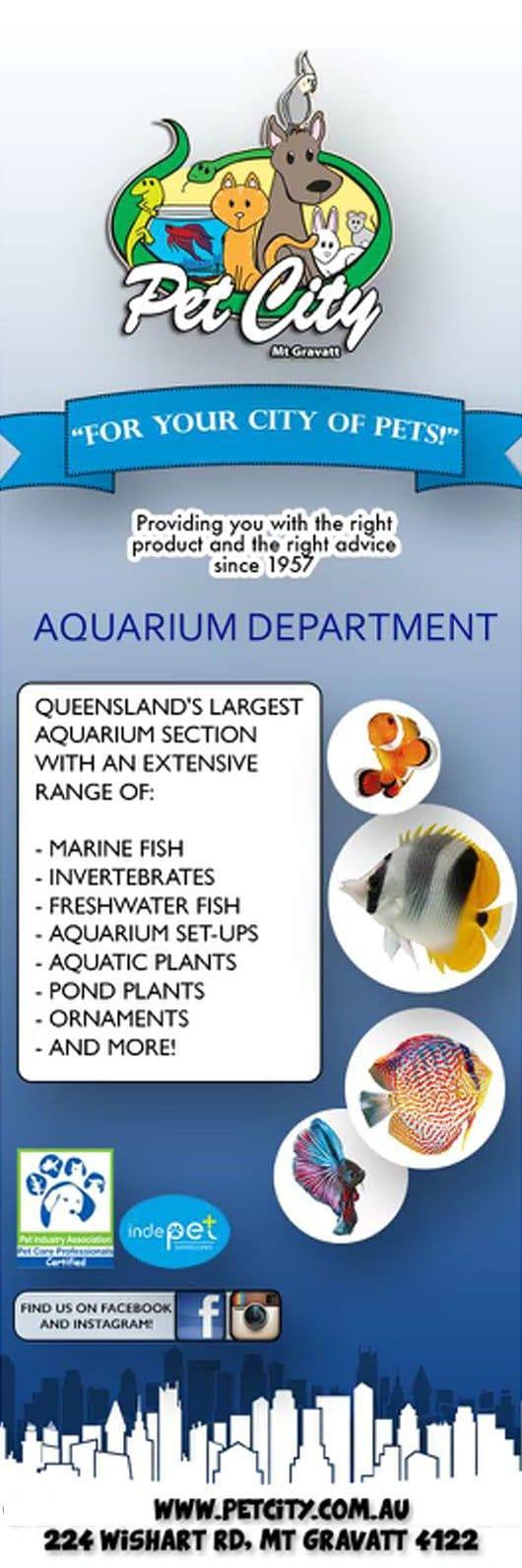 Fish tank queensland - Fish