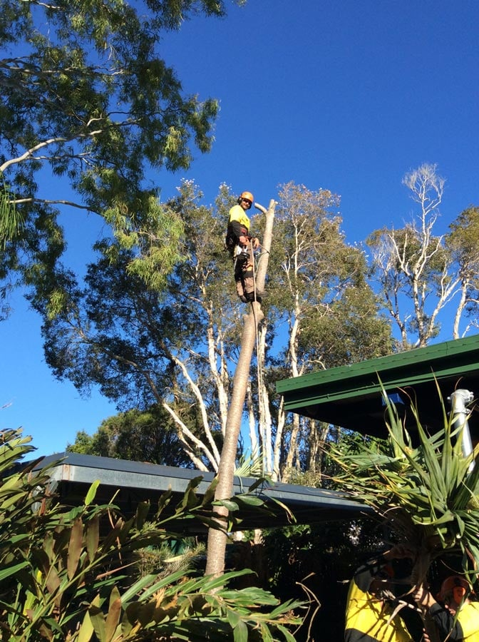 True Blue Tree Amp Stump Removal On Caloundra Qld 4551