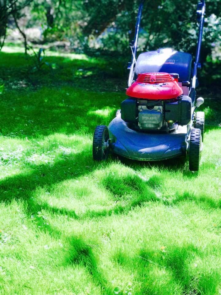 Trim tidy home garden maintenance lawn mowing for Home garden maintenance