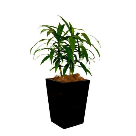Jindalee indoor plant service indoor plant hire newcastle for Indoor plant maintenance