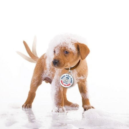 aussie pooch mobile swot Free essay: aussie pooch mobile executive summary aussie pooch mobile was founded is a continuously growing company since the foundation in 1991 dog washing.