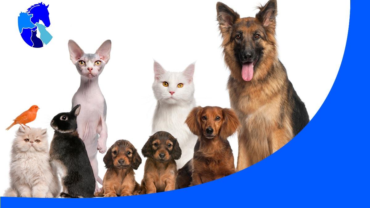 David Brown Veterinary Surgeon - Vets & Veterinary Surgeons