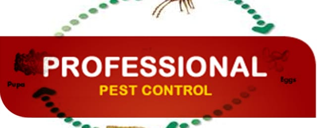 Sun Dry Carpet Steam Cleaning Amp Pest Control Services