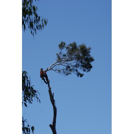 No opening hours provided  sc 1 st  Whereis & Canopy Tree Pty Ltd on Picton NSW 2571 | Whereis®