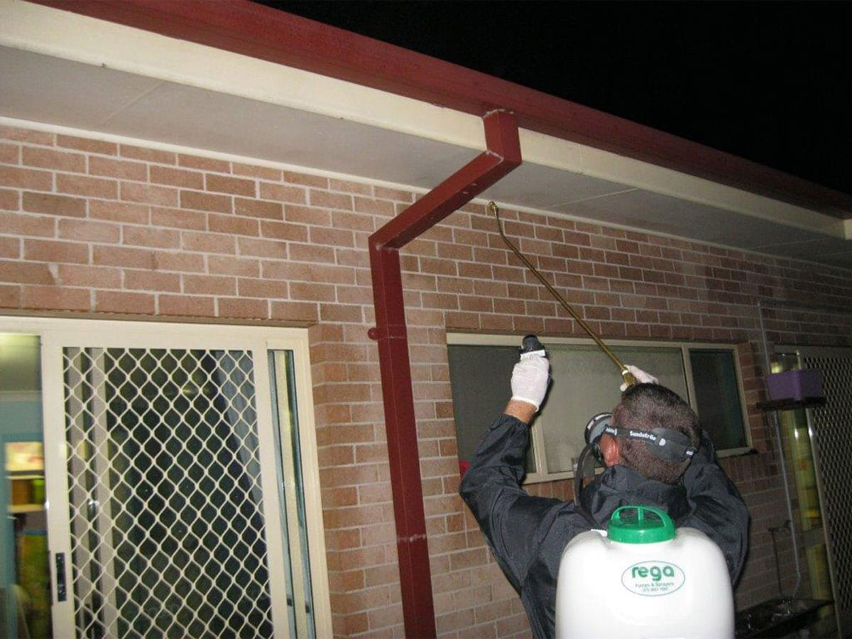Accredited Cleaning Amp Pest Solutions Pest Control 2a