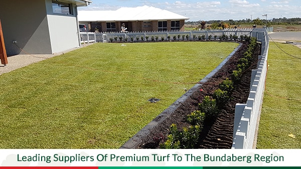 Outstanding Premium Turf Turf Lawn Suppliers Gladstone Alphanode Cool Chair Designs And Ideas Alphanodeonline