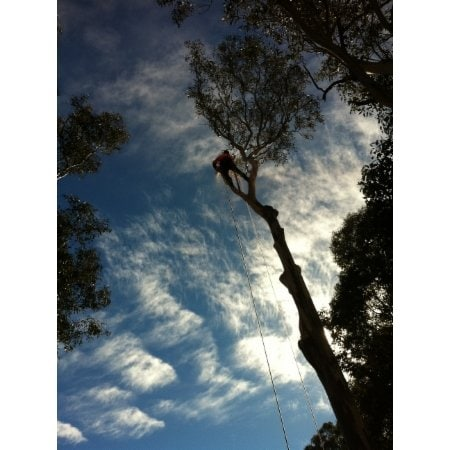 Richard Barnes Tree Services P L Tree Amp Stump Removal