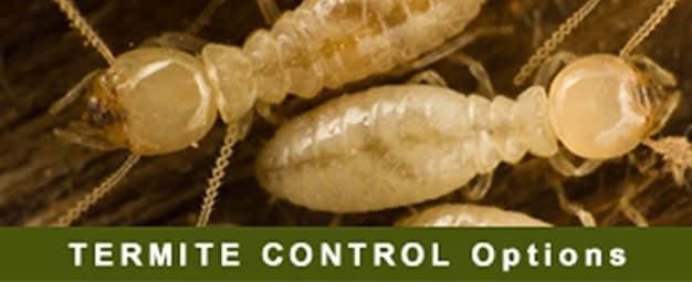 Fumapest Central Coast Nsw Termite Pest Control Pest Control Wyong