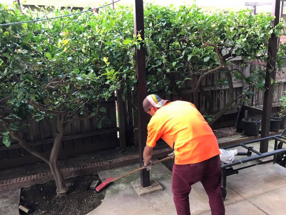 Em Star Tree Services Tree Stump Removal Services