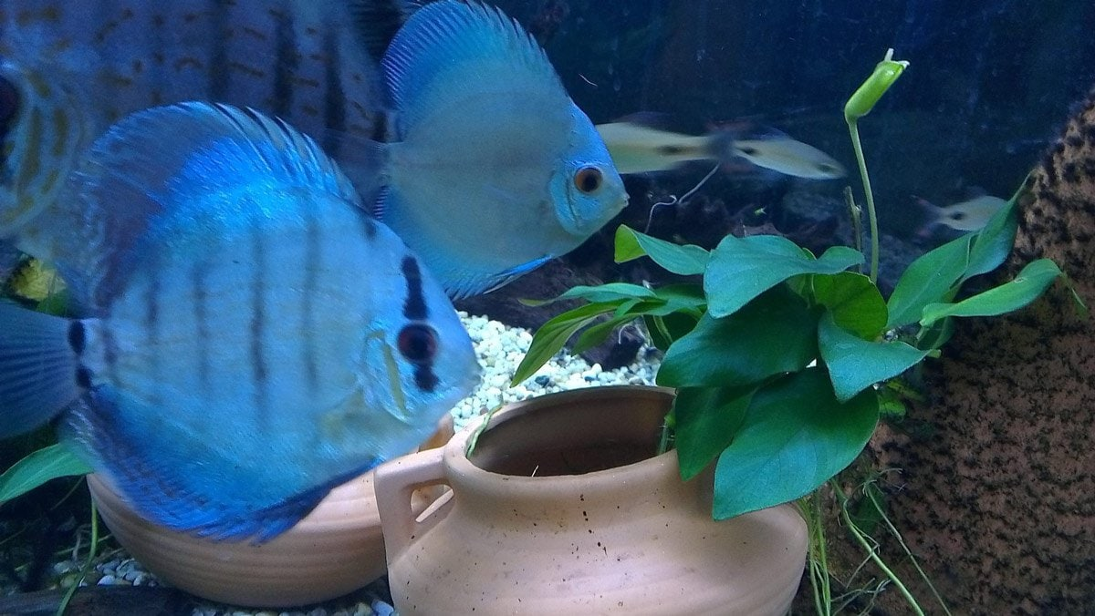 Freshwater aquarium fish brisbane - Have You Used This Business Tell Others About It With A Yellow Pages Review