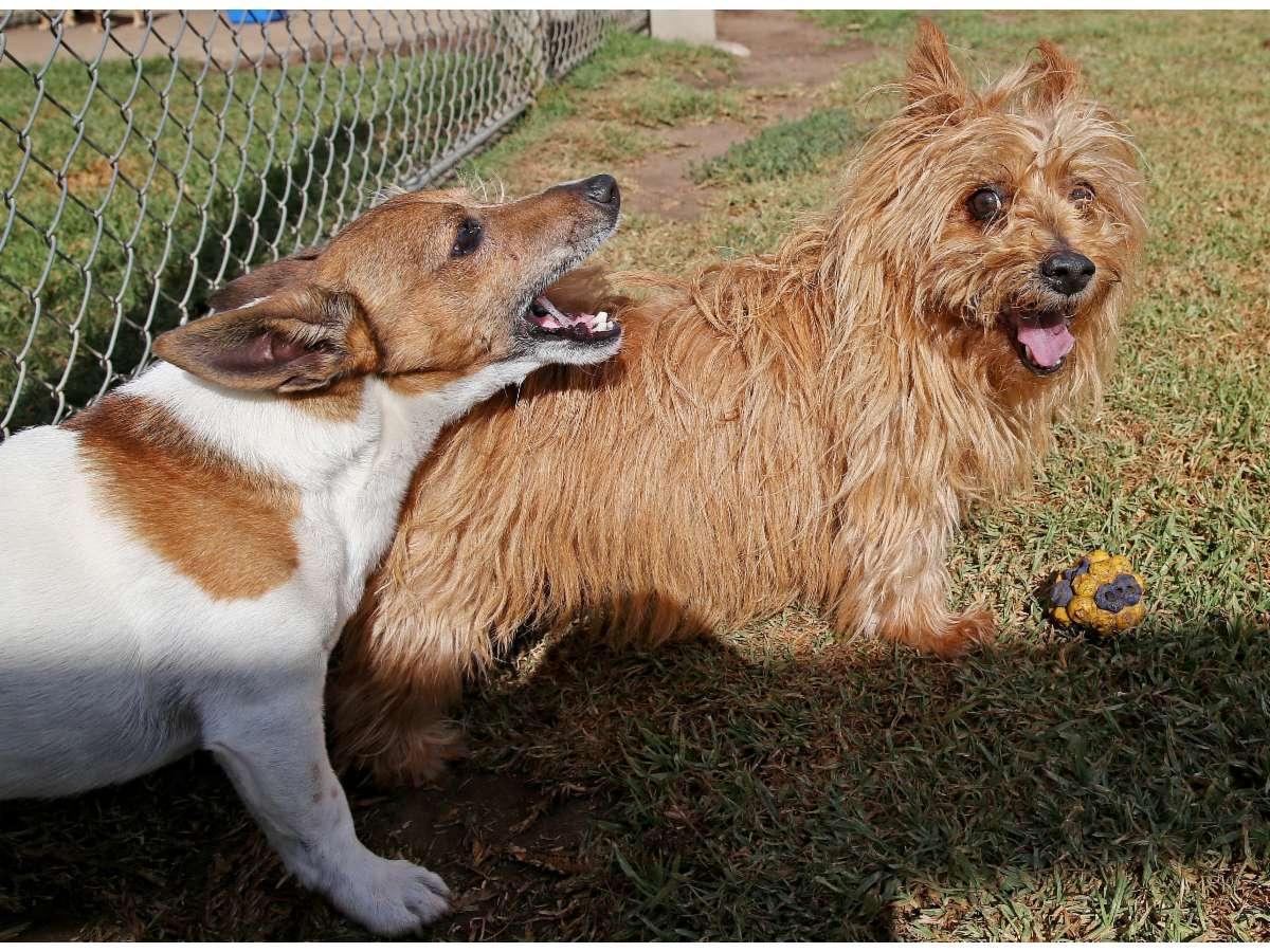 Dog Training Bellarine Peninsula