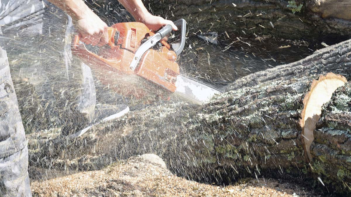 Adelaide tree felling services tree stump removal for Affordable landscaping adelaide