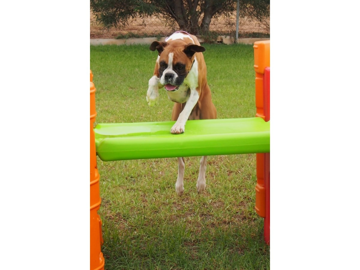 Dog Kennels Penfield