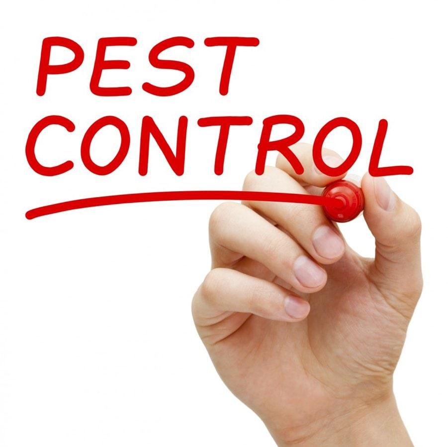 black-white-pest-control-holland-park-4121-image.jpg