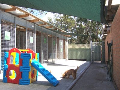 All Paws Pet Motel