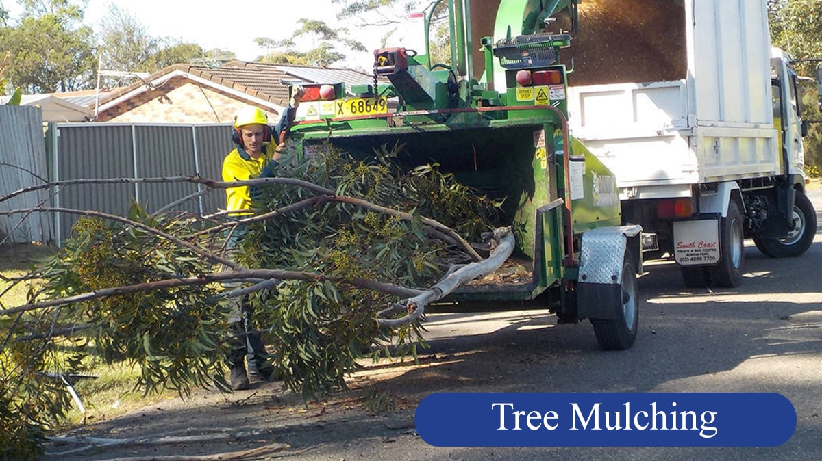A & D Tree Services Pty Ltd - Tree & Stump Removal Services