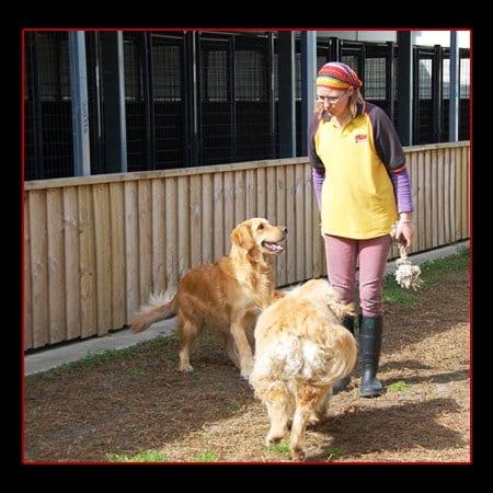 Dog Kennels Dandenong