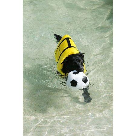 Dog Boarding Kennels Sunshine Coast
