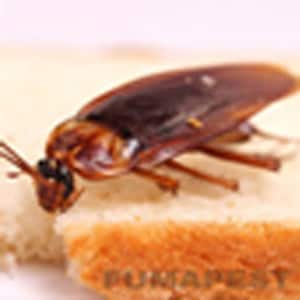 Fumapest Central Coast Nsw Termite Pest Control On Wyong Nsw 2259