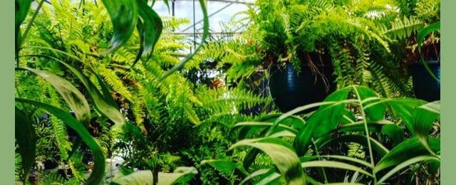 Living Simply Garden Nurseries 10 Beltana Rd Pialligo