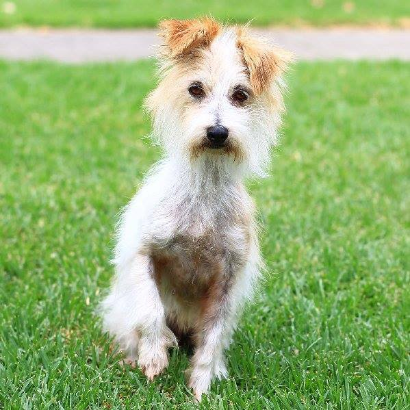 Lost Dogs Home Adoption Au