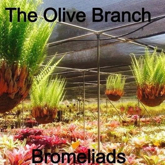 The Olive Branch Bromeliad Nursery Garden Nurseries 232 Canvey