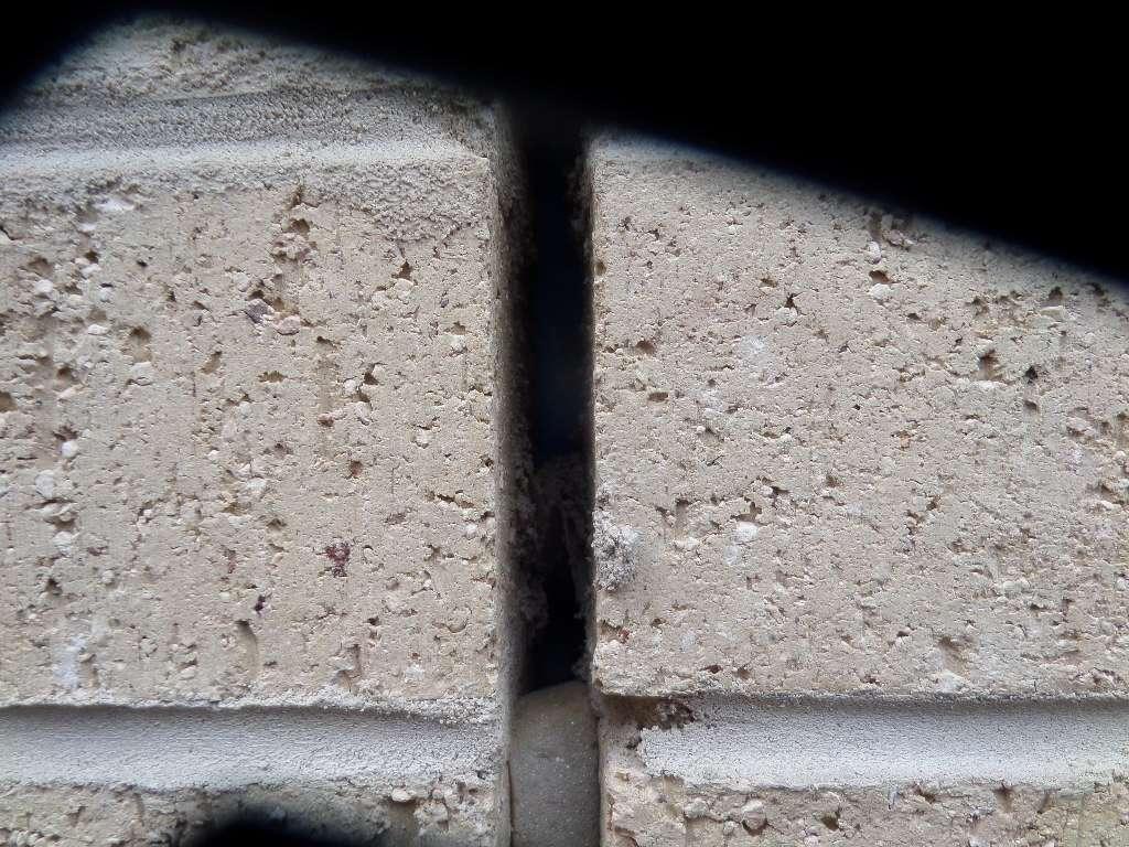 Pest Inspection: Pest Inspection Geelong
