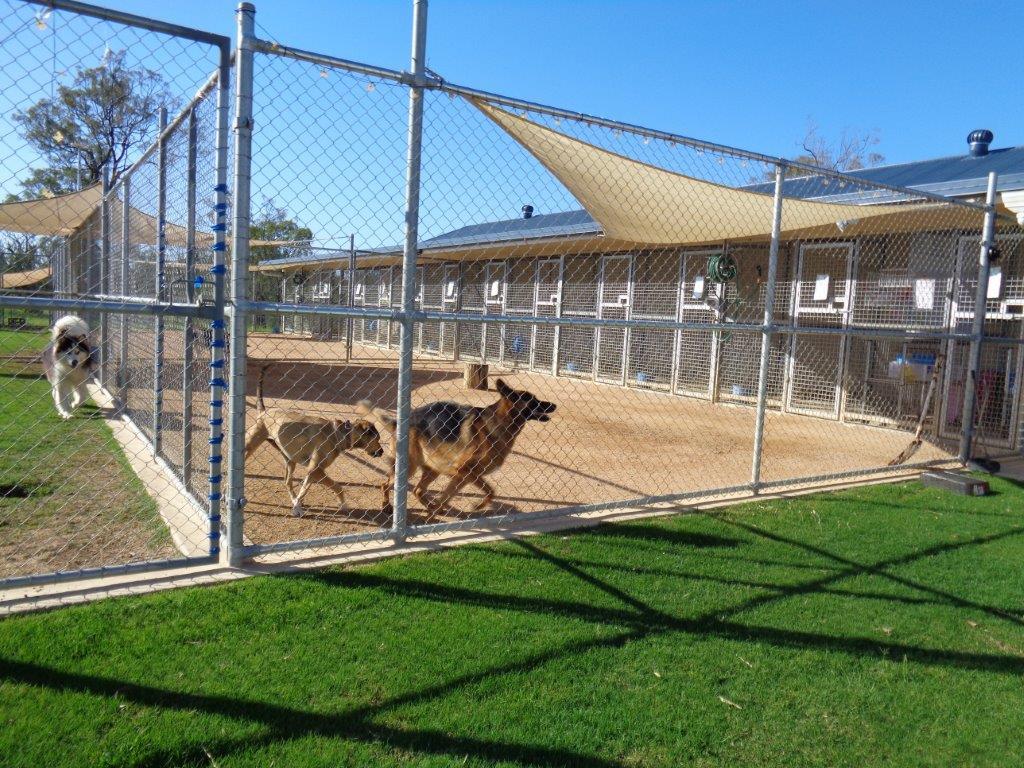 Dog Holiday Kennels Brisbane