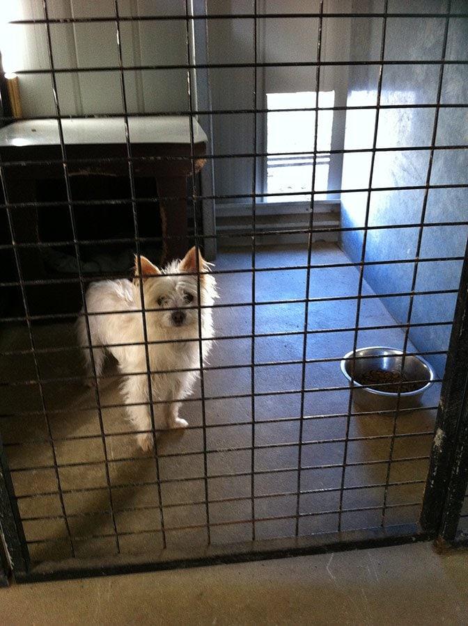 Longford Dog Kennels