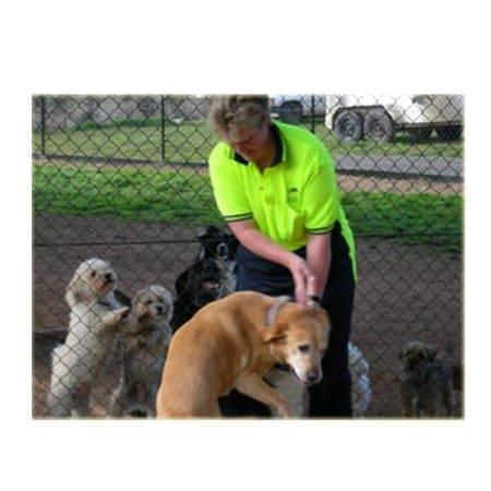 Dog Training Yass